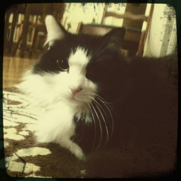 Meow meow la la la la meow.